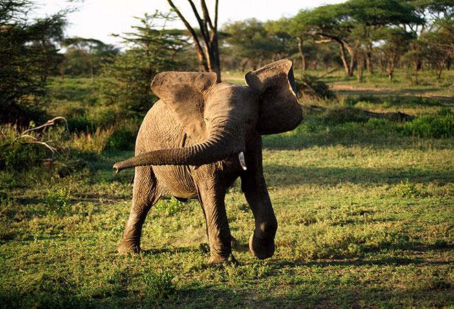 坦桑尼亚将举办东非旅游博览会